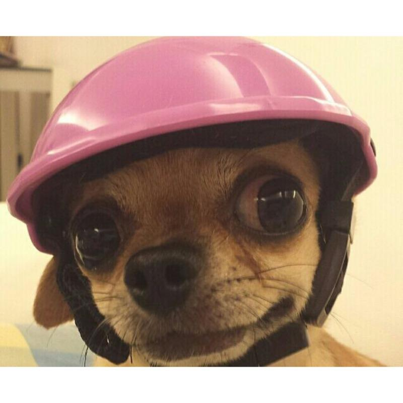 Dog Hat Helmets Puppy Protect Dog locomotive cap pet helmet hard hat morphing cap bullfighting buggy funny headwear