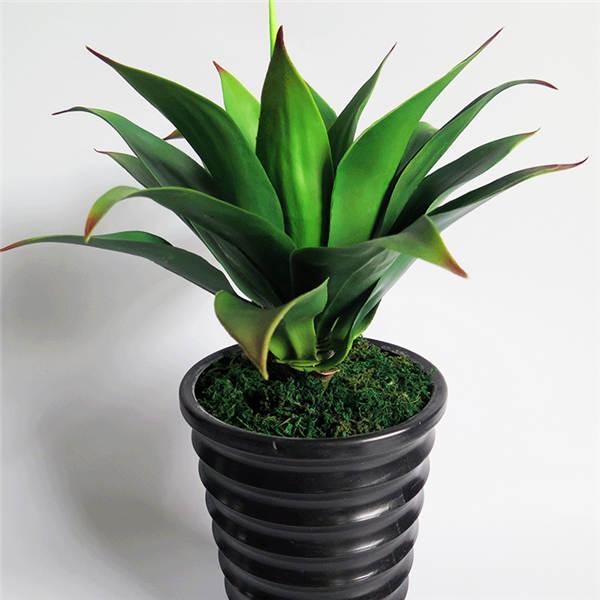 2020 Mixed Aloe Cacti Agave Bonsai Rare Succulent Plants Agave