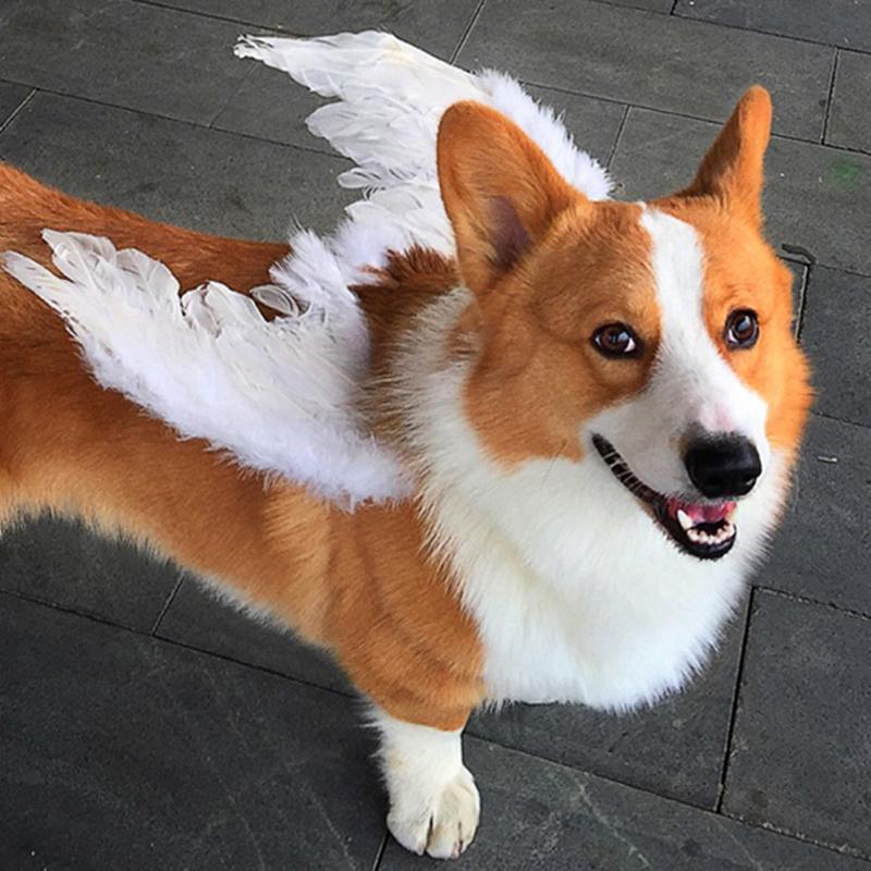 decoración de Halloween perro de halloween traje de ángel alas de mascotas perros gatos adornos para la cabeza del gato de Navidad de Cosplay