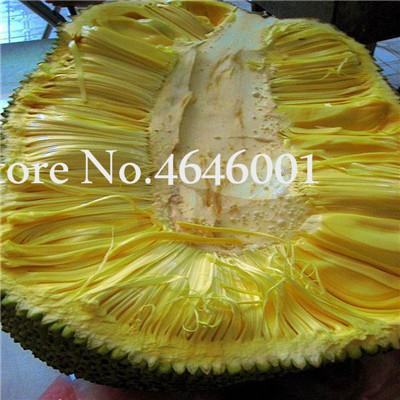 2021 Fresh Jackfruit Bonsai Fruit Trees Seeds Tropical Rare Giant Tree Plant Rare Miracle Fruit Garden Plant New Big Flowering Plant From Ymhpjq1 1 Dhgate Com