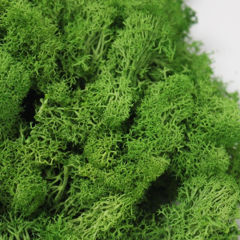 20g / set künstliche Anlage Äonenleben Moss / Garten Innendekoration-Wand-DIY Blume Material Mini Garten Micro Landschaft Zubehör