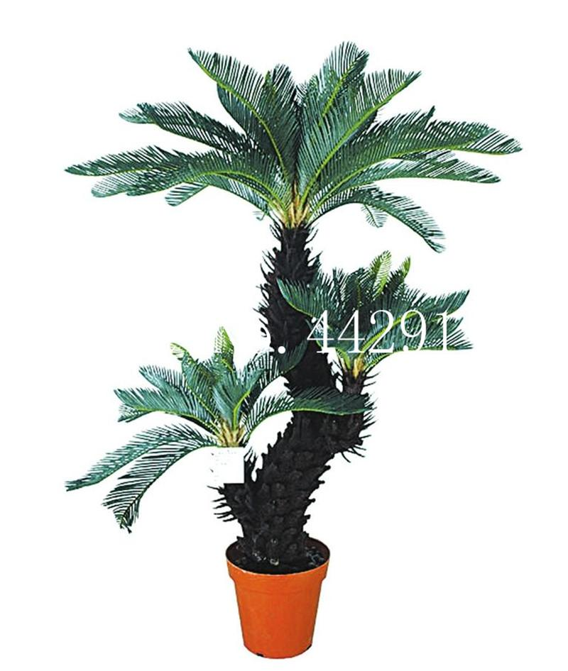 2020 Bag Blue Cycas Bonsai Sago Palm Tree Plant Cycas Tree Bonsai The Budding Rate 97 Rare Potted Plant For Home Garden Flower Seeds From Ymhzdy 1 26 Dhgate Com