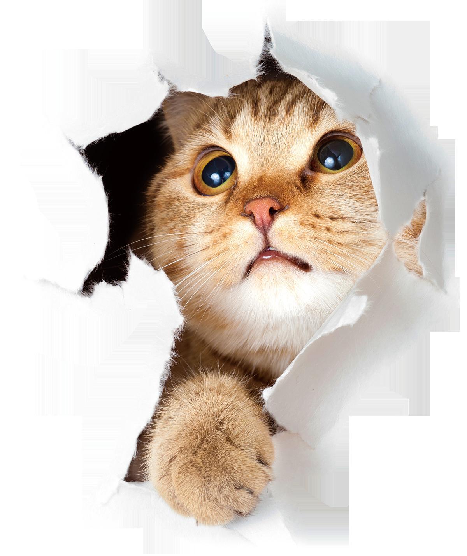 3D chaton et chiot cassé Stickers Muraux Salon Salle de bains couvercle de toilette portable autocollants Stickers Muraux