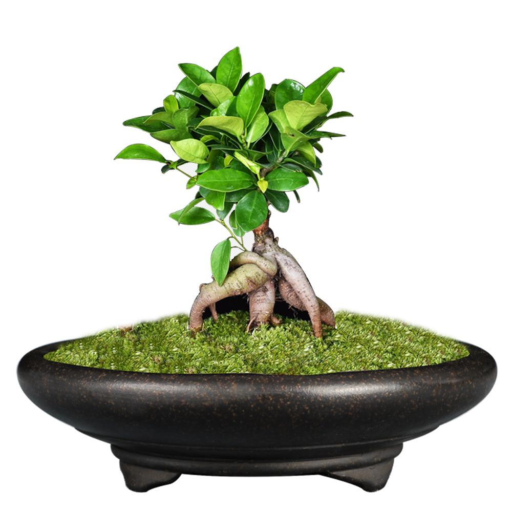 Bonsai pot Unglaze bacino Cina YiXing Mini Bonsai vasi da giardino flowerpot viola sabbia di ventilazione Succulente ceramica vasi da fiori CX200805
