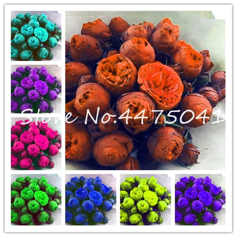 20 Adet Gökkuşağı Egzotik Çift Şakayık Bonsai Bitki Tohumları Çok Renkli Çok Yıllık Şakayık Çiçek Çin Paeonia Suffruticosa Bitki DIY Ev Bahçe
