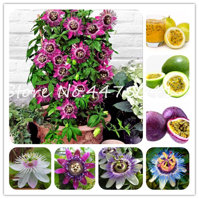 Горячей ! 200 шт. Смешанная страсть страсть, сладкий (Passiflora Incarnata) Маракуирует фрукты бонсай семена растений тропический цветок для дома для дома