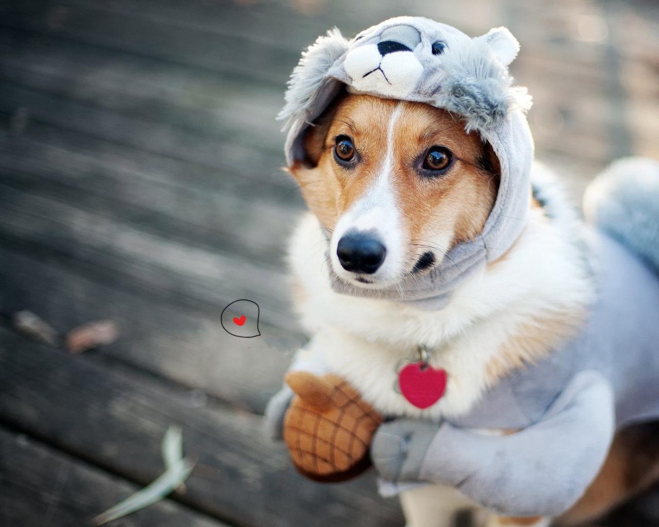 2020 neue Multi-Color optional Pet Retractable Zugkraftgurt Automatische Netter Hund Walker Zugseil automatisch versenkbare Zugseil Hund