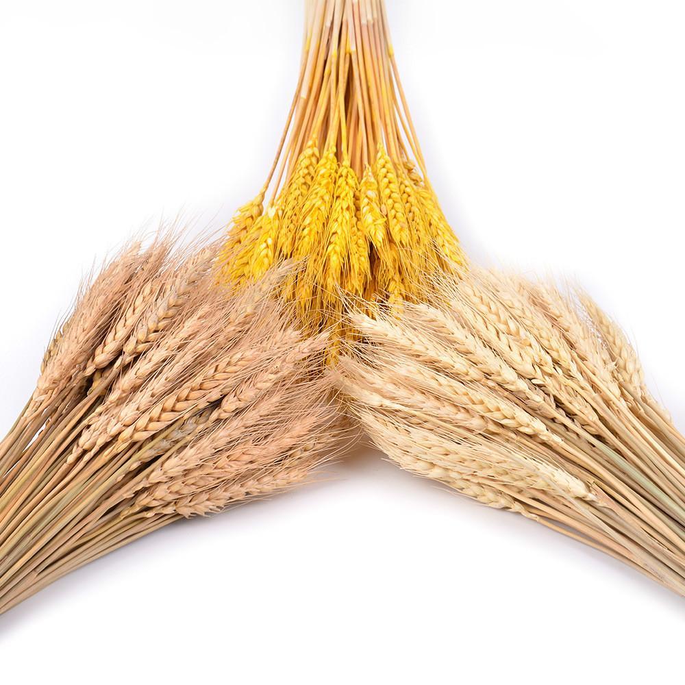 Decorativo secco artificiale fiore bouquet di grano di bianco secco decorazioni di frumento decorazione naturale della pianta naturale secco