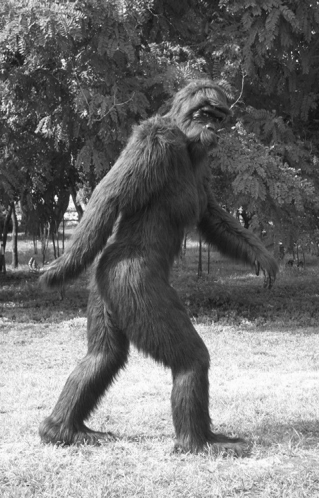 Bigfoot Sasquatch Creature Art Silk Poster 24x36inch