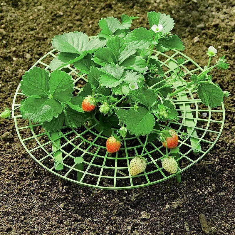 الفراولة يقف الإطار حامل زراعة الرف زراعة الفواكه تسلق دعم مصنع فاين الدعامة زهرة عمود القوس الحدائق حامل