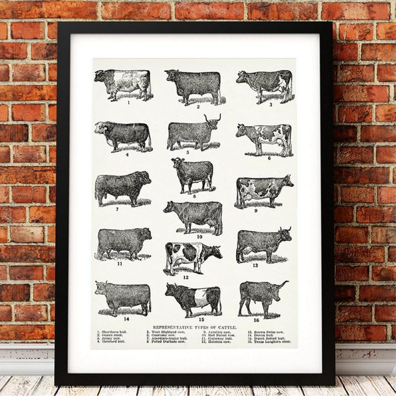 Breeds of Cow Canvas Poster Farmhouse Wall Art Print Types of Cattle Painting Vintage Picture Dairy Poster Barn Wall Art Decor