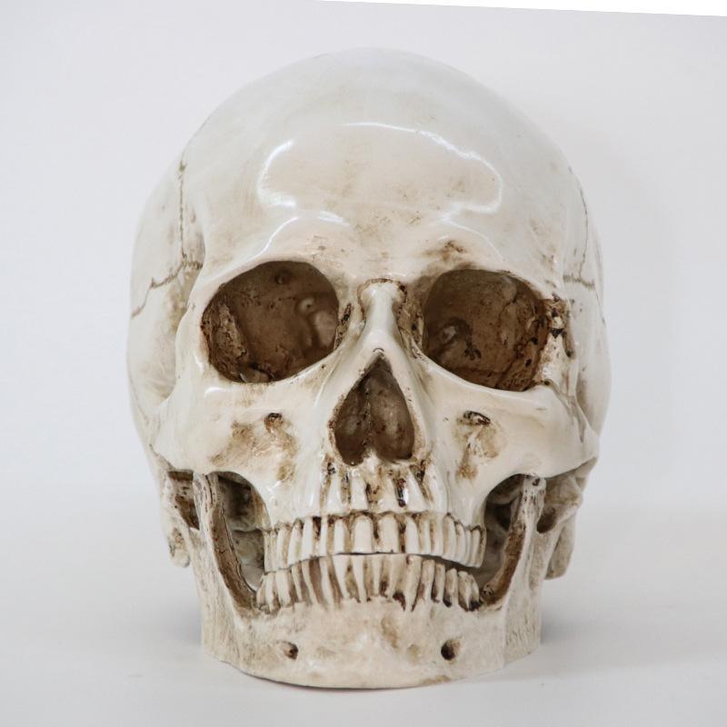 تماثيل الجمجمة الراتنج النحت هالوين ديكور المنزل الديكور الحرفية الجمجمة الحجم 1: 1 نموذج الحياة طبق الاصل عالية الجودة