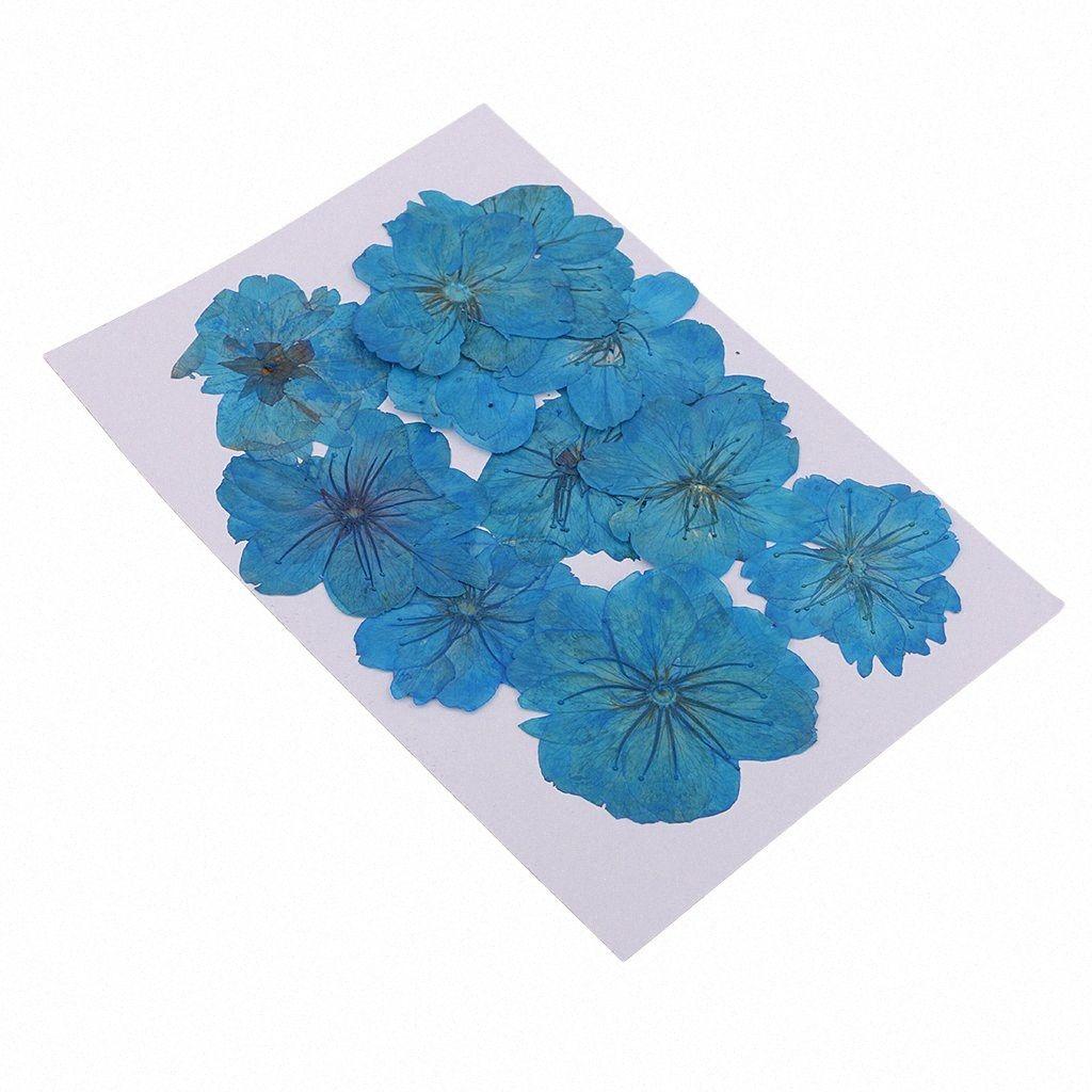 12 Pezzi reale Premuto fiori secchi Cherry Blossom tinti fiori blu di stile floreale Crafts Card Making Jon1 #