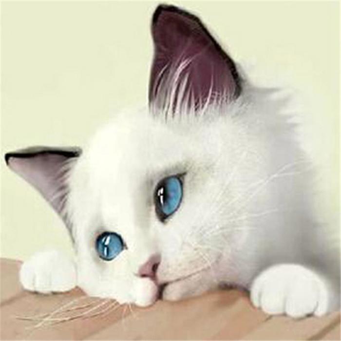 Nueva costura de bricolaje kits de diamantes pintura de resina de punto de cruz completo diamante redondo bordado mosaico Decoración Dove animales yx0178 gato blanco