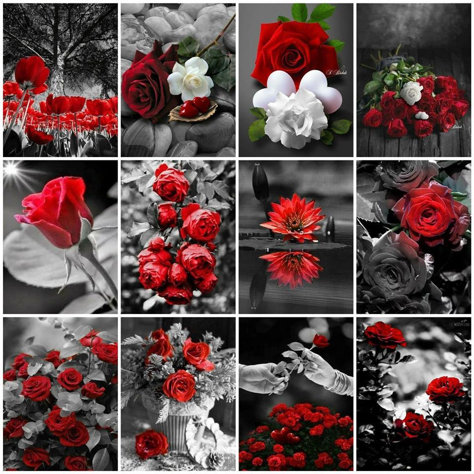 AZQSD Malen nach Zahlen auf Leinwand-Kits Rose DIY Unframe Coloring nach Zahlen Rote und schwarze Serie Acrylfarbe einzigartige Geschenk