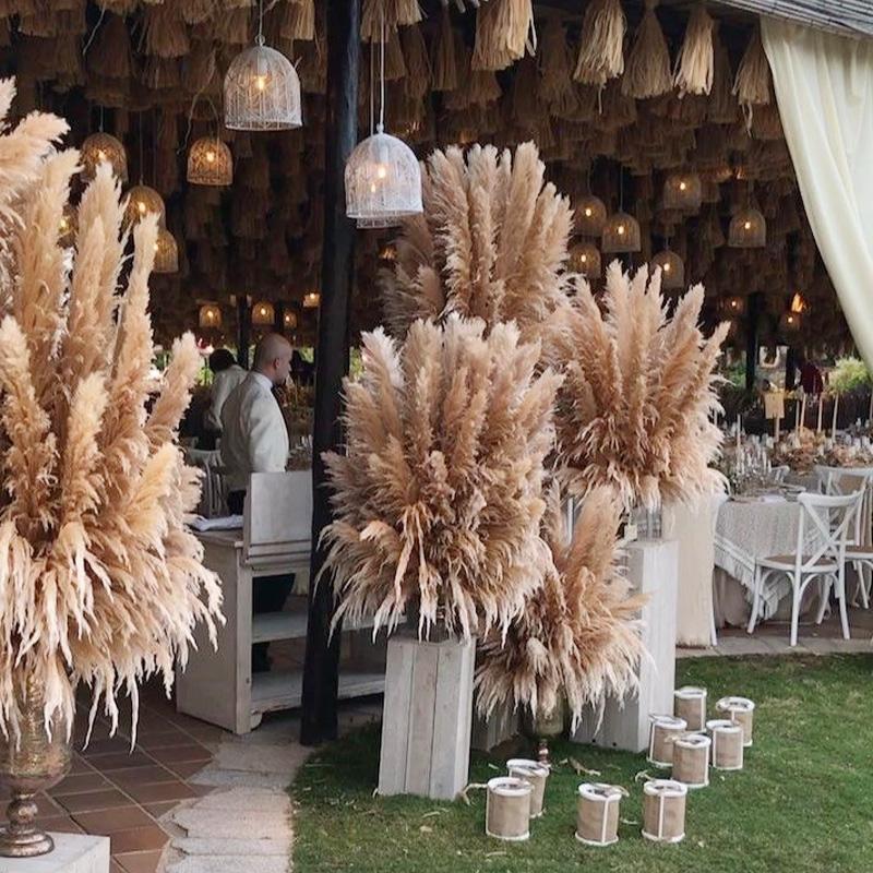 / 20pcs 10/08 Doğal Kurutulmuş Çiçek Reed Pampas Çim Ev Dekorasyonu Düğün Süsleme Çiftliği Düğün Arkaplan Doğal Pampas Çim