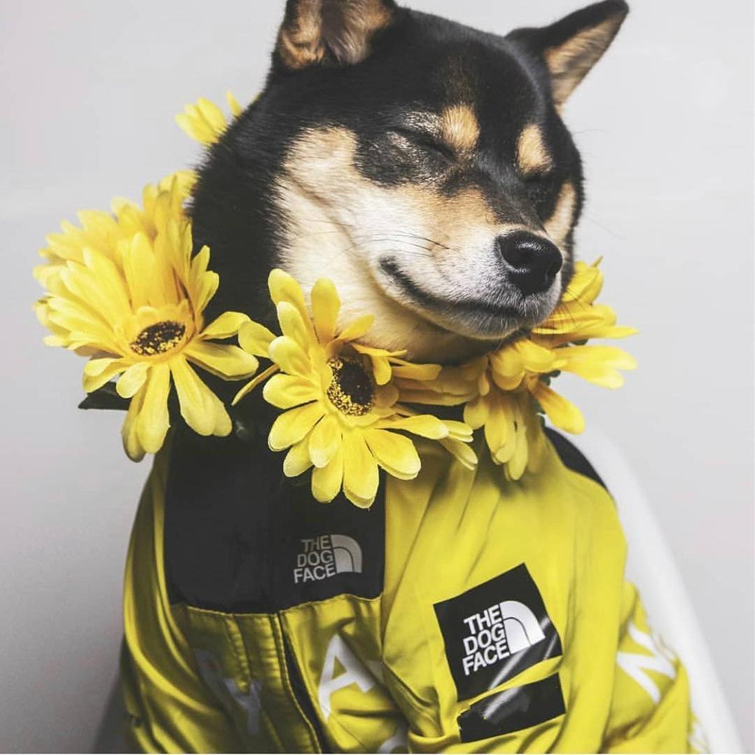 Пальто собаки Face куртки дождя собаки Большой дождевик для собак домашних животных Лицо Ротвейлер Одежда pDlCa hotclipper