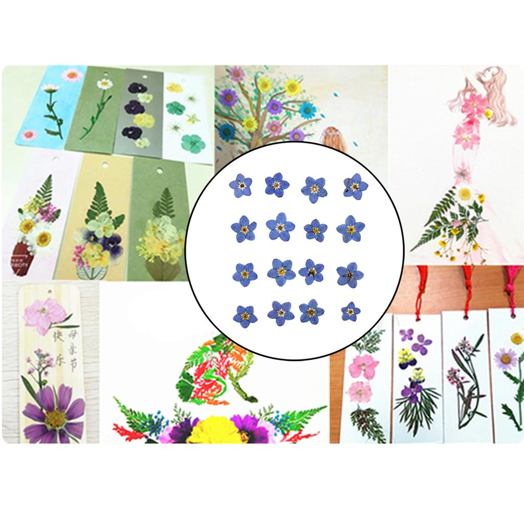 20pcs Natural Dried Flowers Forget Me Not for DIY Phone Case Resin Ornament