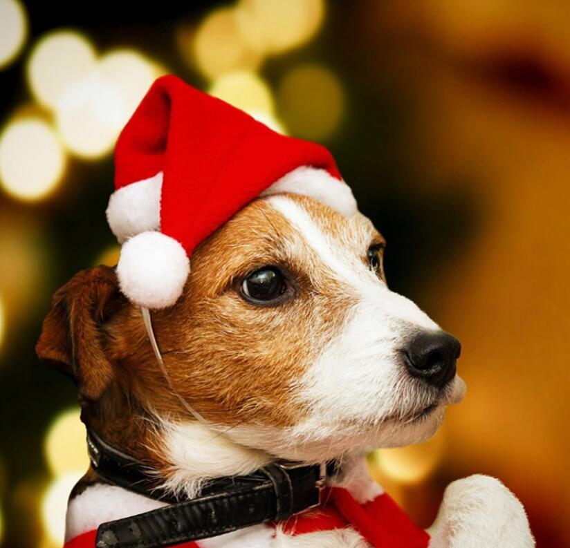 New Christmas decorations pet Santa Hat dog little hat premium furry hat pet DHL Free shipping