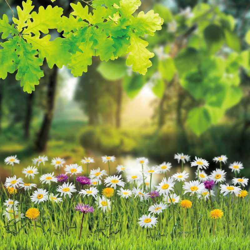 Sfondi Laeacco verde per Fotografia Fotografia Albero Foglie fiori erba Primavera Natural Scenic Fondali Photocall