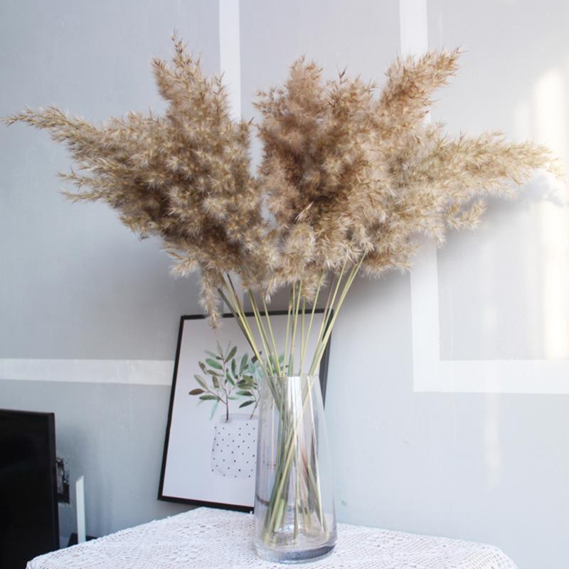 10pcs / 20pcs Pampas-Gras Natural Plant Bulrush Blumen Reed Echtblumenhauptdekor-Hochzeits-Dekoration Communis Farbe Getrocknete
