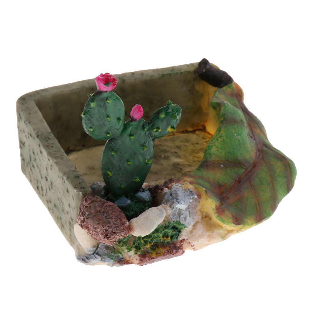 Nourriture pour les reptiles Eau Plat Vivarium Décoration