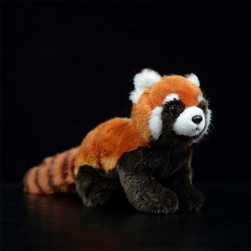 Simulação Panda Red Panda Pelúcia Brinquedos Ailurus Fulgens Menor Panda Linda Bonecas Bonecas Soft Kawaii Animais Crianças Coleção Presente 201222