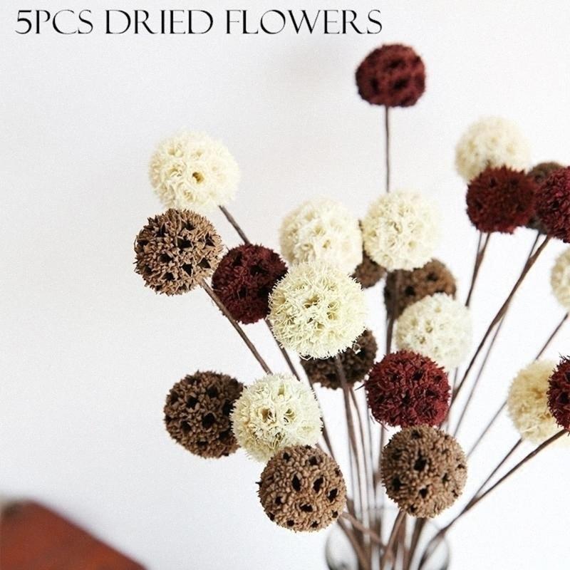 5pcs / lot Getrocknete Blumen Natürliche dekorative Hauptdekoration DIY Bastelzubehör getrocknetes Obst Rustikal Dekor Hochzeit Dekorationen E1Cv #