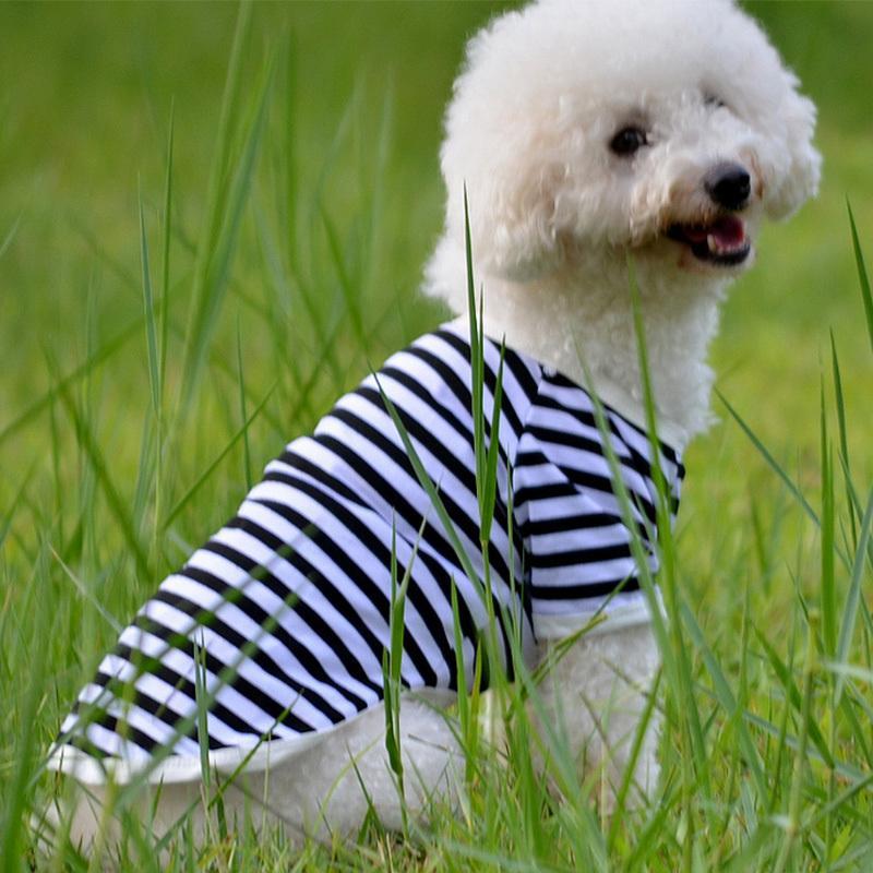 roupa do cão listrado \ \ \ 124; `Cão de tamanho médio revestimento do verão '; pet roupas', Chihuahua