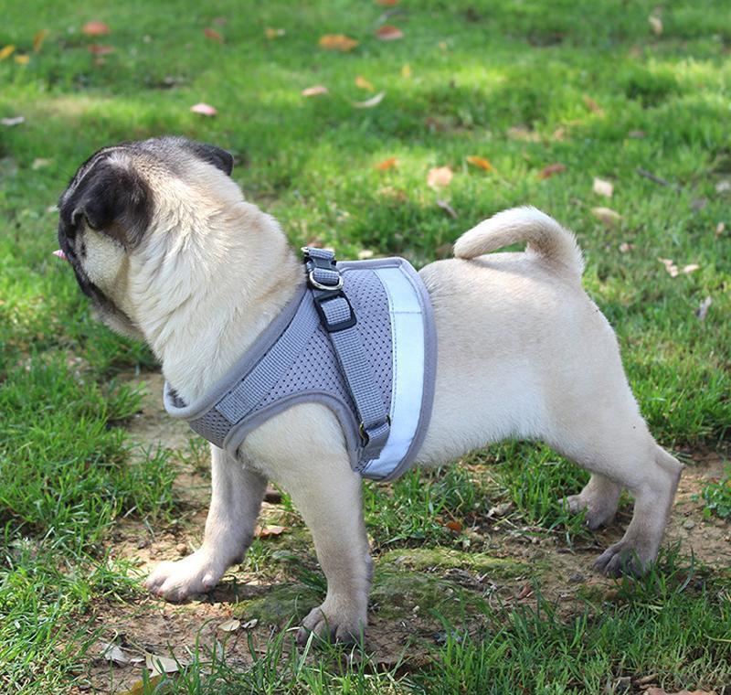 Жгут для собак для маленьких средних собак Нейлоновая сетка щенок Щеки Щепки Жилет Светоотражающий ходьба Le Wmtqdq xhlight