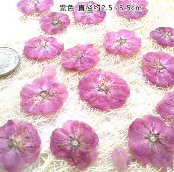 Fleurs décoratives Couronnes 10pcs / Lot Romance Cherrance Fleur de cerisier pressé Matériaux conservés pour la carte Crossle Crystal Cleat Bookmark