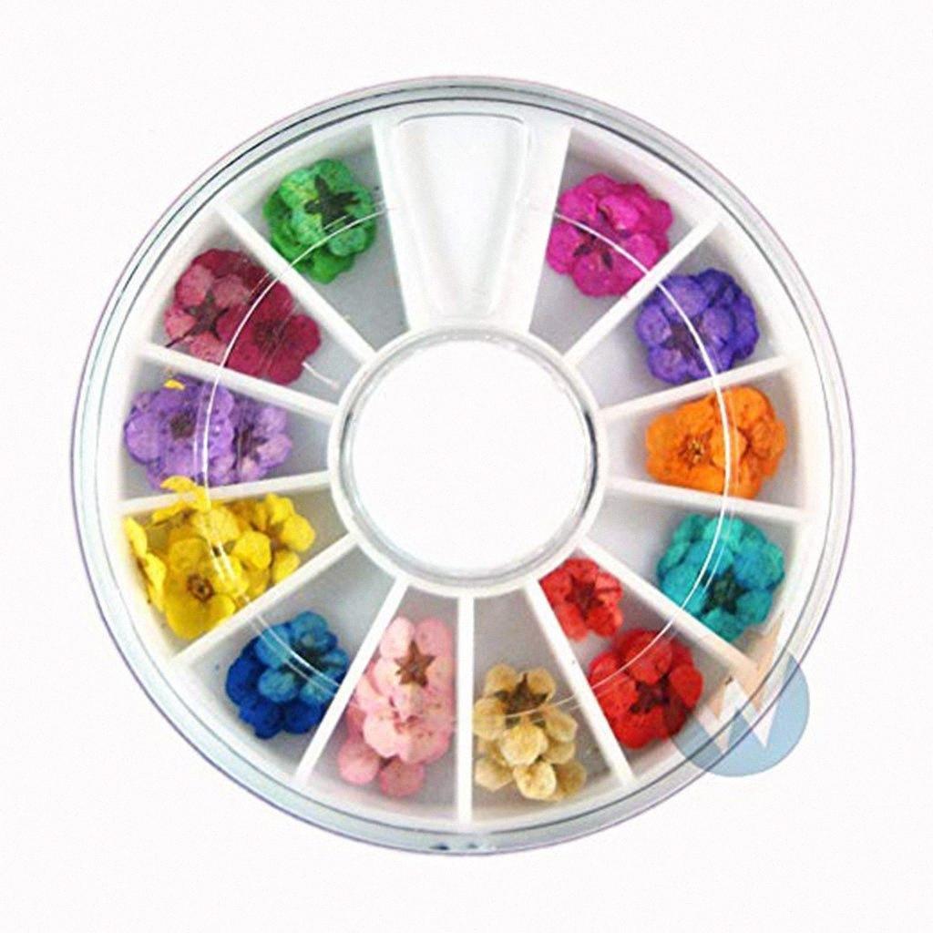 Art Fleurs à sec Accessoires réel sec 12 couleurs de fleurs séchées Bundle Set en roue SZTUCZNE kwiaty w doniczce piante artificiali EEP1 #