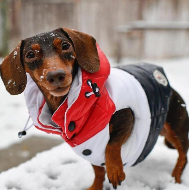 Klasik Patchwork Tasarımcı Pet Coats Ins Moda Kalınlaşmak Bulldog Ceket Kış Sıcak Kişilik Teddy Giyim Giyim
