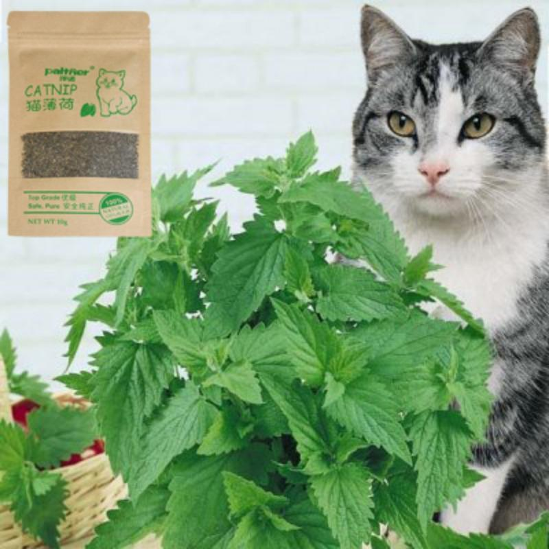 Cat Toys 100% Quality Natural Organic Catnip Cattle Grass 10 Grams Mint Flavor Funny Toy Pet Supplies