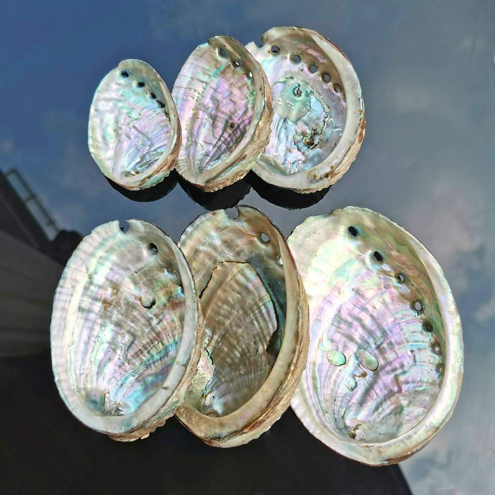5 tailles de la coquille d'Abalone décor nautique décor nautique plage de mariage coquillages océan décor bijoux diy shell savon plat aquarium décor h jllseh