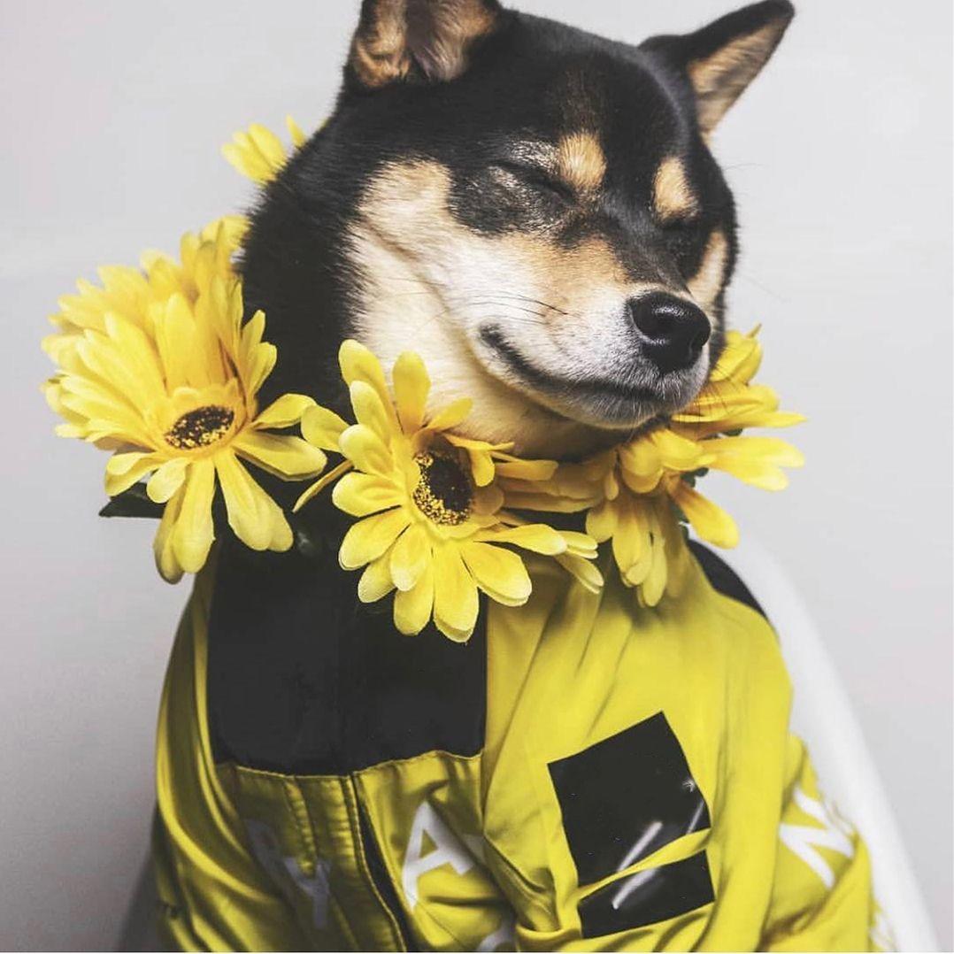 Новая собака одежда для собак плащ для домашних животных одежда для маленькой собаки французский бульдог мопс собаки толстовки веткой куртка для собаки 5xl