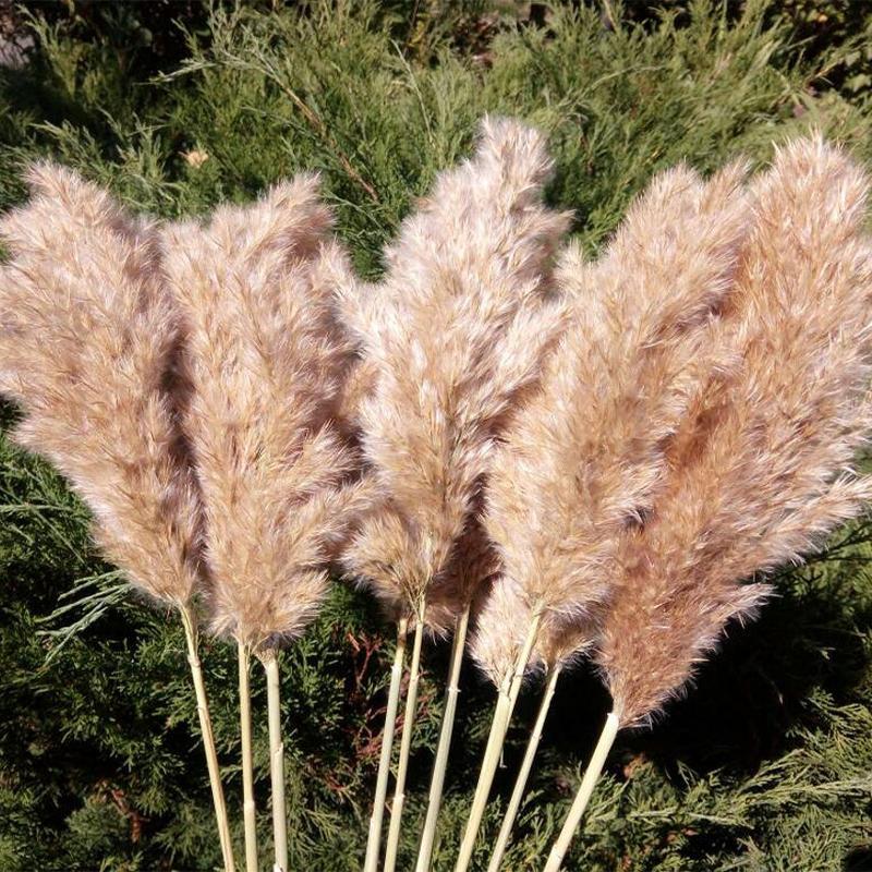 20 Kaynaklanıyor Pampas Çim Buket Kurutulmuş Çiçek Düğün Kullanımı Noel Dekor Yapay Çiçekler Güz Dekorasyon