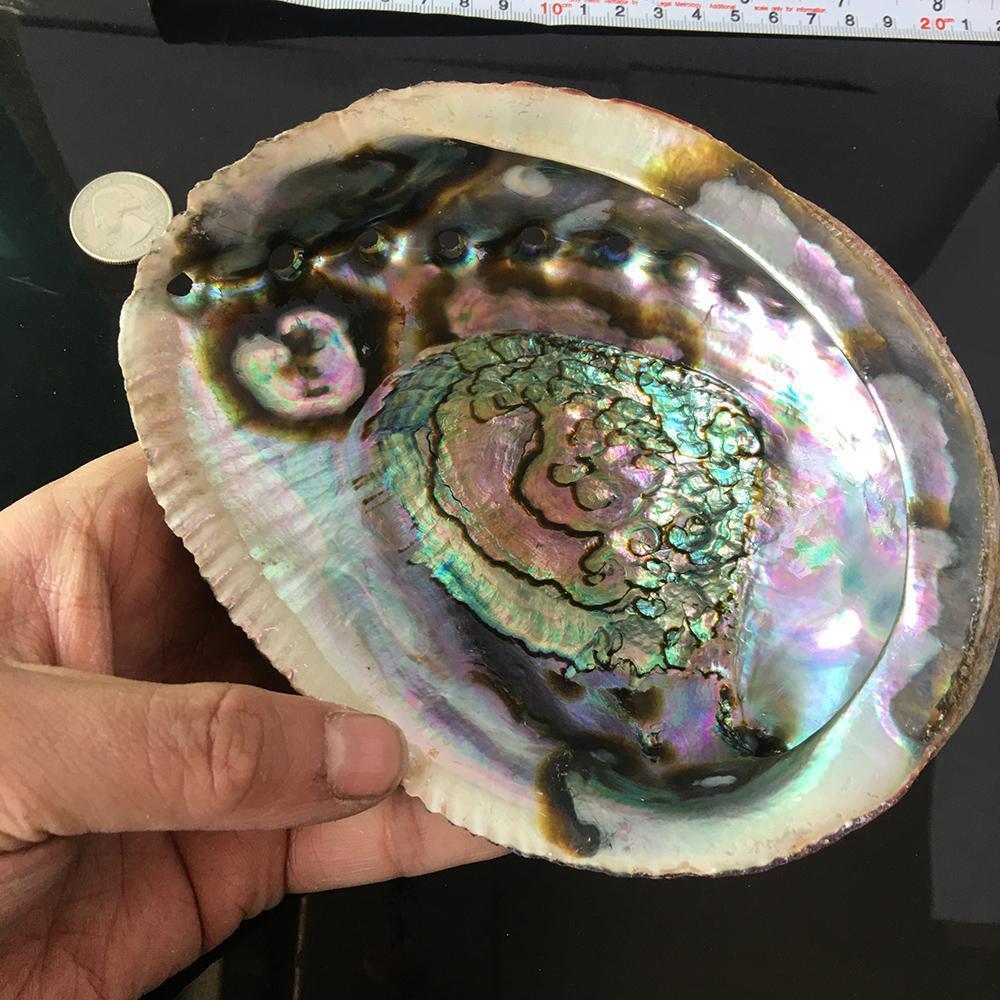 Изысканный натуральный Abalone Shell Seashell Soalbox Rainbow LG Sea Green Blue Beach House Soapbox Изысканный натуральный H Bbyila