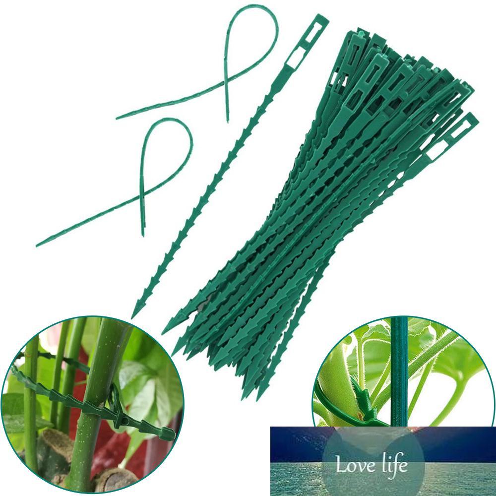 30pcs plastique Câble Câble de plante Cadre réutilisable Arbre de jardin Escalade Grimpant Prise en charge Réglable Fishbone Spur Tie Garden Tools