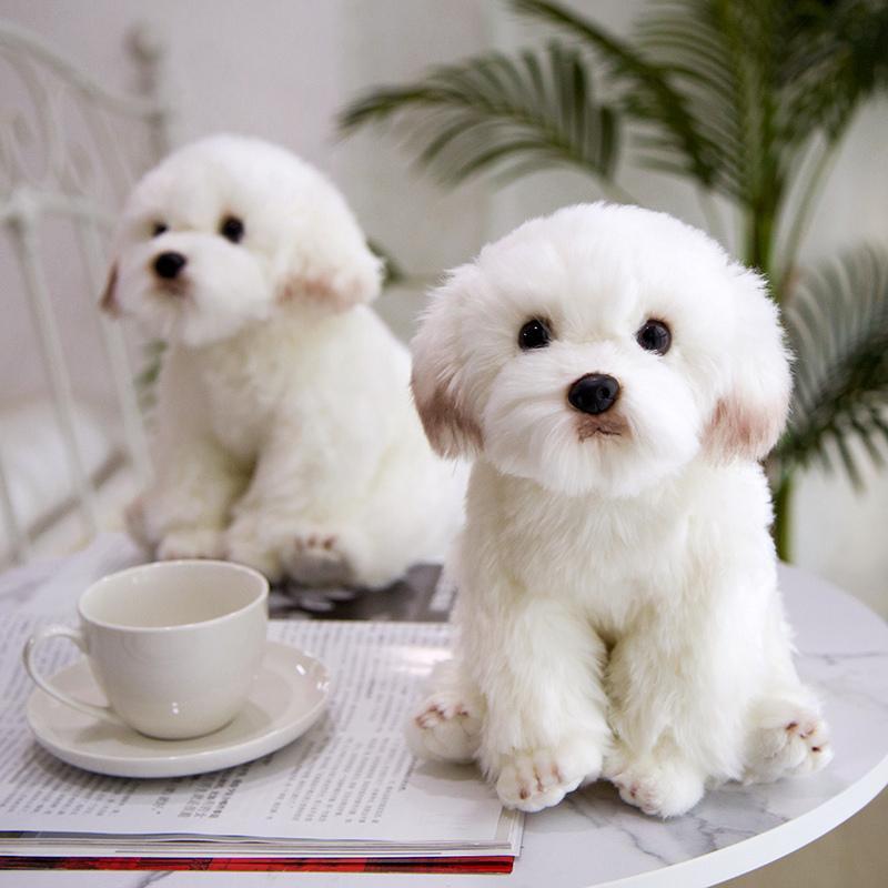 Simulation Malteser Hund Plüschtier Tooled Tier Super Hohe Qualität Realistische Schnauzer Spielzeug Für Luxus Wohnkultur Haustier Liebhaber Geschenk 201027