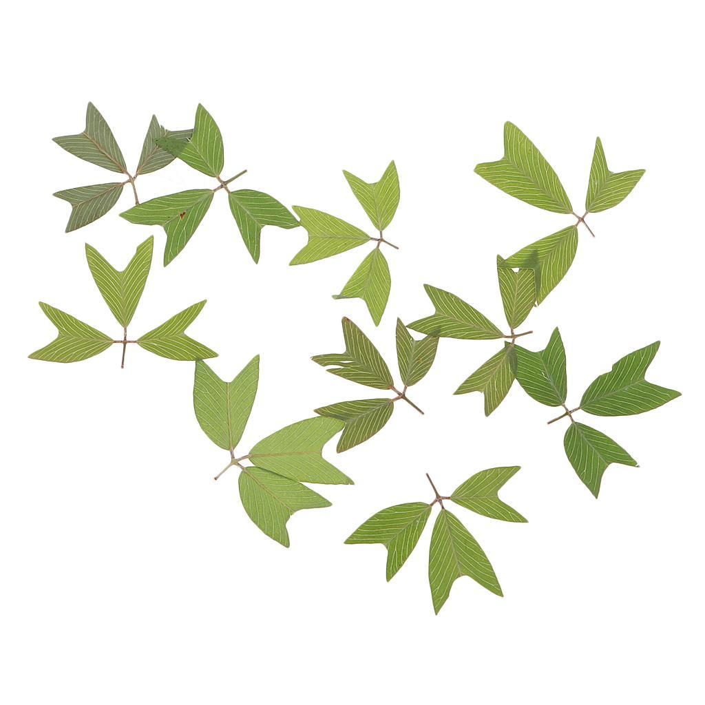 10 Pièces 1 - 2 cm / 0,39 - 0,79 pouces \ « \ » Real Pressée naturel Fleurs séchées embellissements pour la fabrication de cartes bricolage scrapbooking Arts Artisanat