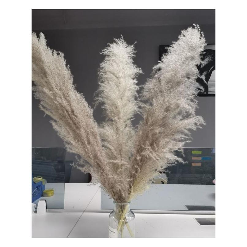 Natural Plant Pampas Grass Large Dried Flower Wedding Special Fluffy Feather Flower Ceremony Decoration Decorati jllzit insyard