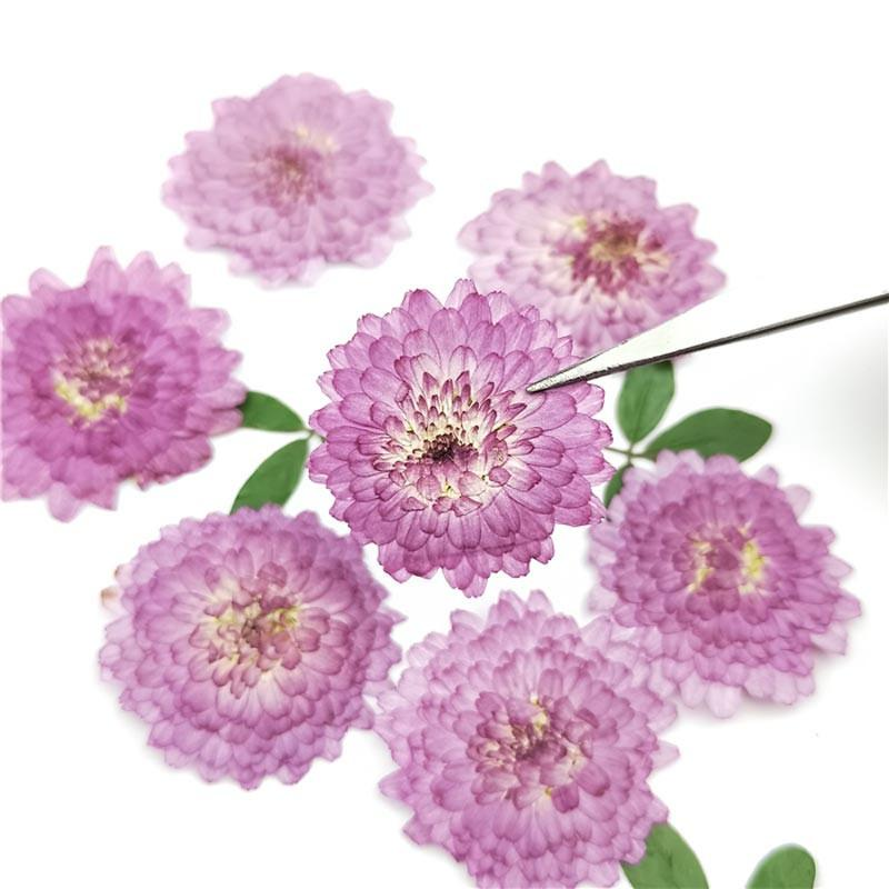 Kleine lila Gänseblümchengepresste Blume für Kerze DIY Material Free Sendung 100 stücke Y1128