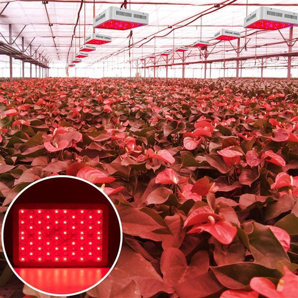 600 W Çift Cips 380-730nm Yeni Tam Işık Spektrumu LED Bitki Büyüme Lambası Beyaz Premium Malzeme Işıkları Büyümek