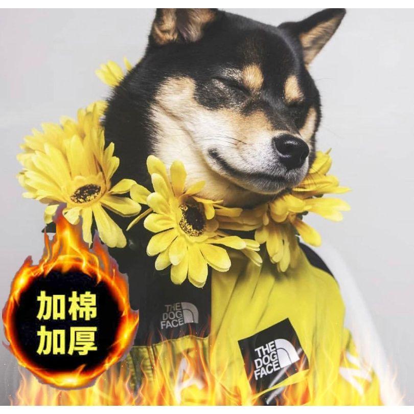 Petsyard Giacche Bandiera Bandiera Moda Dog Cane Piove A Piove A Pieve Pet Cotton Antivento Aintenuta Auforici USA National WMTLWF Grande DBNDE