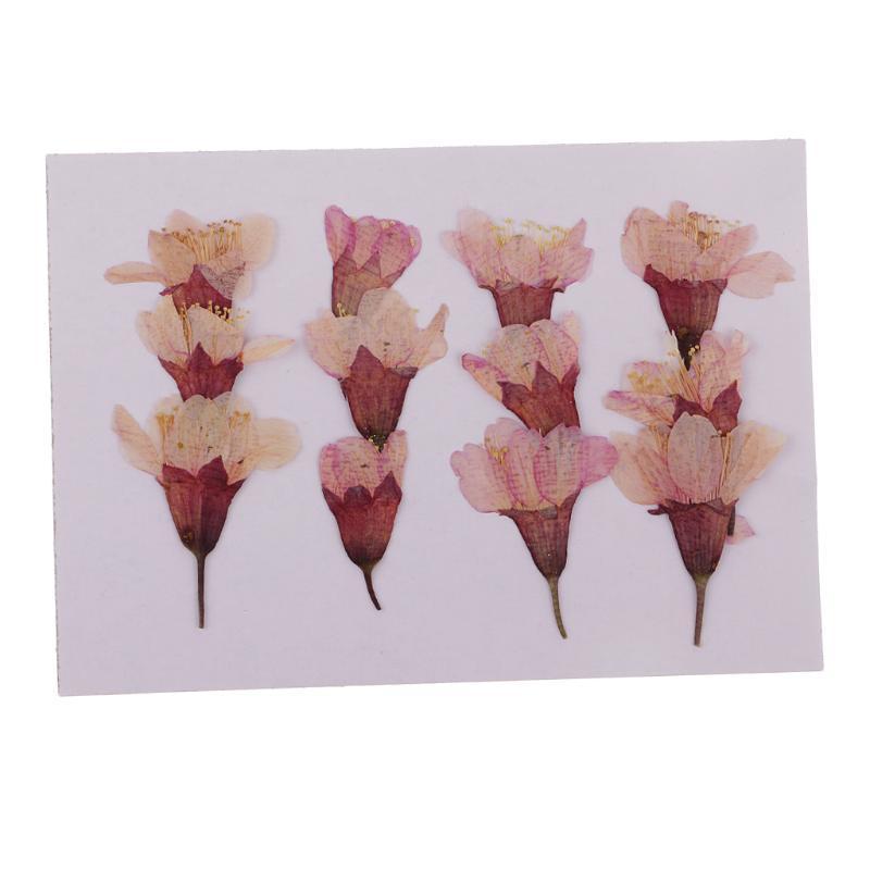 MagiDeal 12x pressionado Real Sakura Flower Secado Flores DIY Caso de telefone Scrapbook Artesanato para fazer Cart Card Craft Acessórios