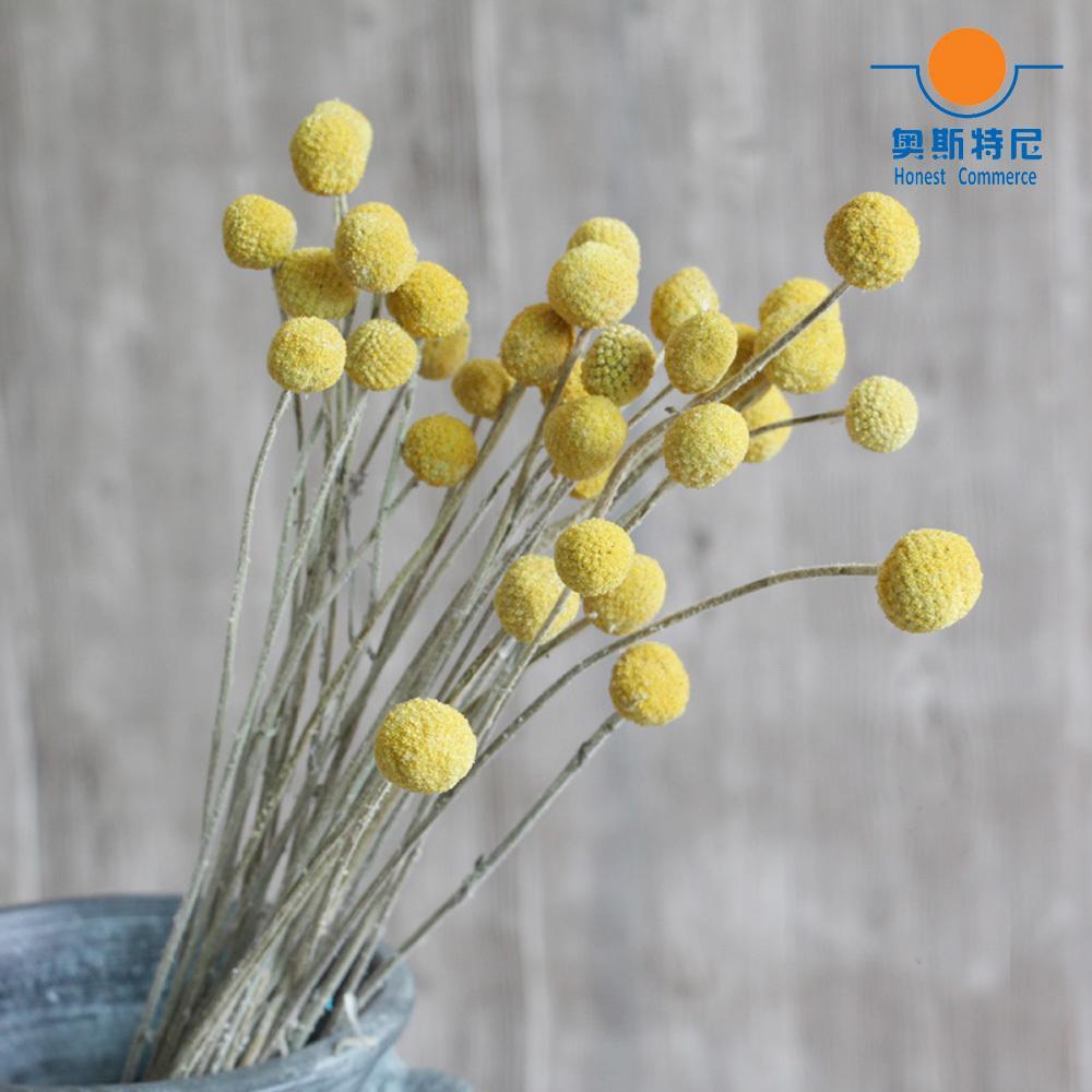 20 STÜCKE Getrocknete Natürliche Blume Blumensträuße Getrocknete Crastion Flower Bouquets Goldene Ball Blume Bündel Y1128