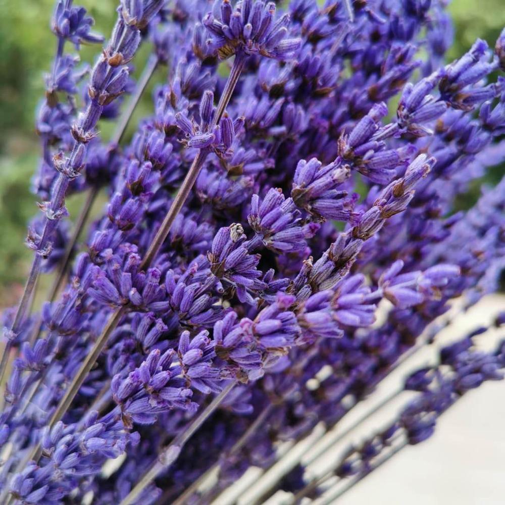 45g / 20-35cm, natürlicher konservierter Lavendel-Blumenstrauß, echter ewiger Lavendel arrangieren Blumen für Hochzeit Dekoration Zubehör Z1120