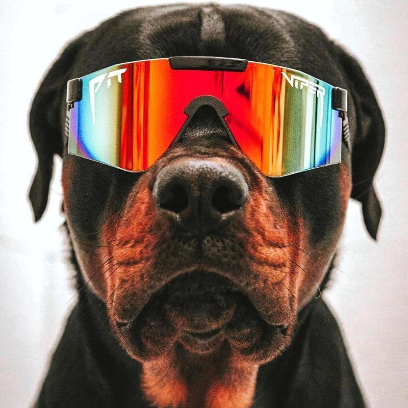 Óculos de proteção TR90 Viper Quadro polarizado Óculos de sol Espelho Mulheres Projeto Design Reflexivo Moda PV01 Sun Homens de Condução Lentes Pit Giapa