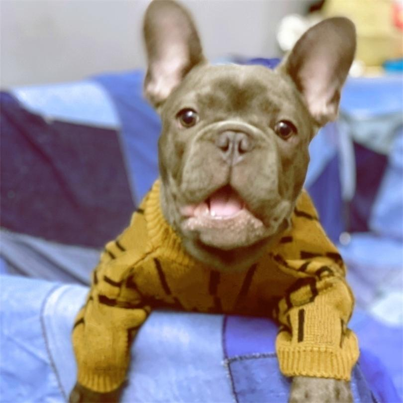 Mode Designer Petit Moyen Chiens Lettre Imprimer Vêtements de chien pour Bulldog French Bulldog Winter Pippy Pull Puppy Pull A03 201225